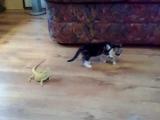 Котёнок и ящерицы.
